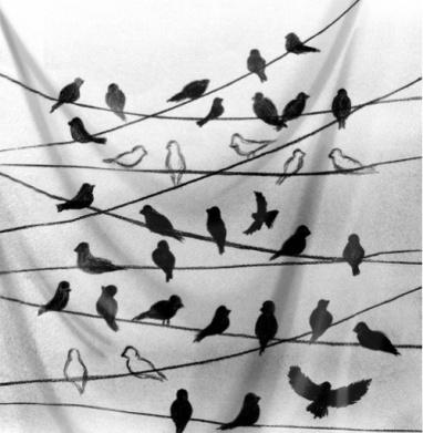 Птицы на проводах - белый фон - птицы, Популярные