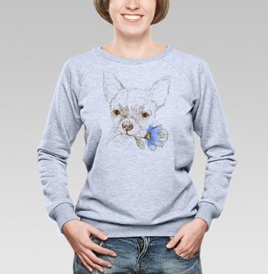 Чихуахуа - Купить детские свитшоты с собаками в Москве, цена детских свитшотов с собаками  с прикольными принтами - магазин дизайнерской одежды MaryJane
