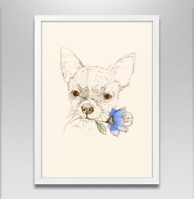 Чихуахуа - Постер в белой раме, собаки