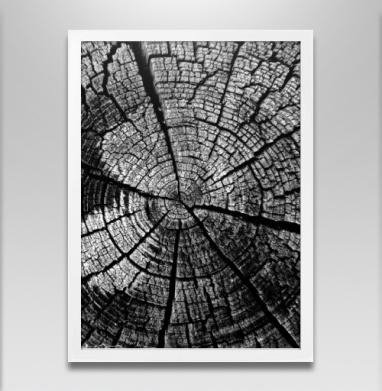 Кольца жизни - Постеры, деревья, Популярные