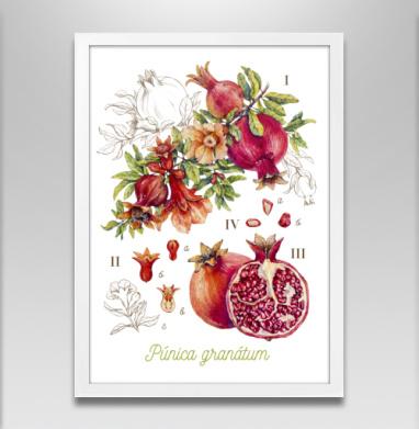 Гранат. Ботаническая акварель - Постеры, красота, Популярные
